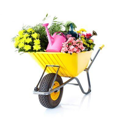 flower-img5